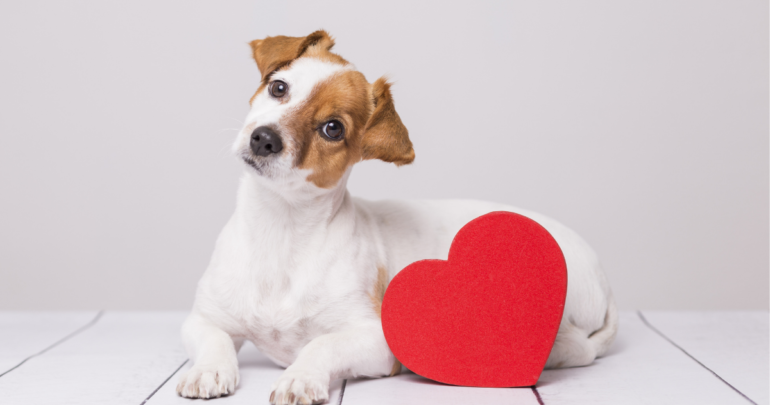 Pets on Valentine's Day