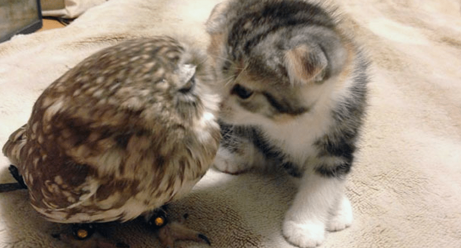 owl and kitten