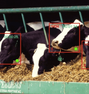 facial recognition for cows