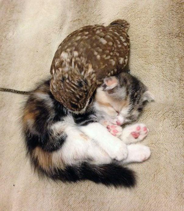 kitten and owl