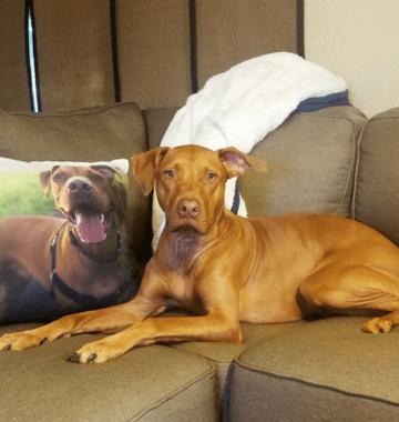 CanvasPop photo pillow