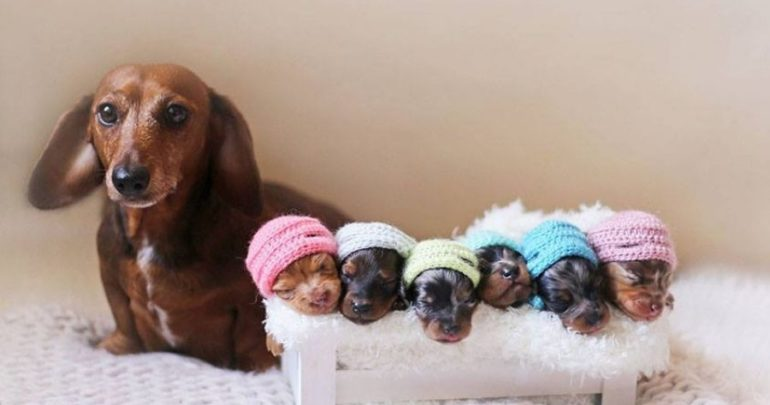 Newborn Puppy Photoshoot
