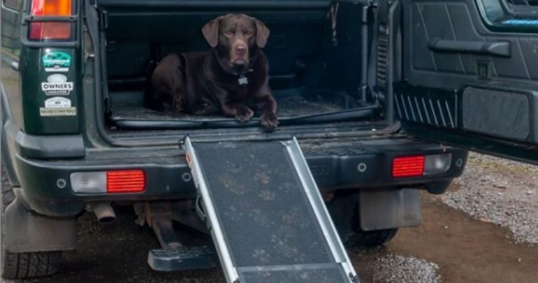 Dog Ramp on Vehicle