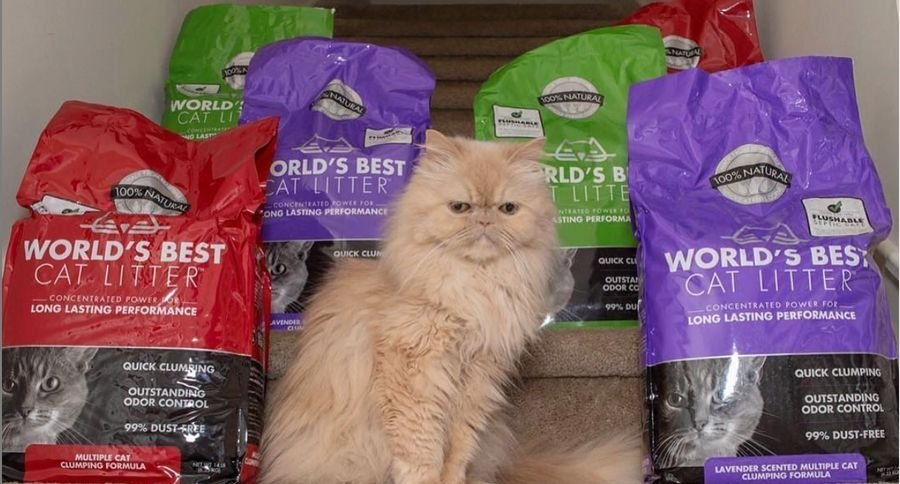 The World S Best Cat Litter Is The Dust Free Flushable