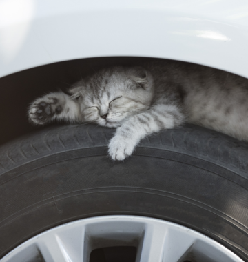 Knock Car Cats