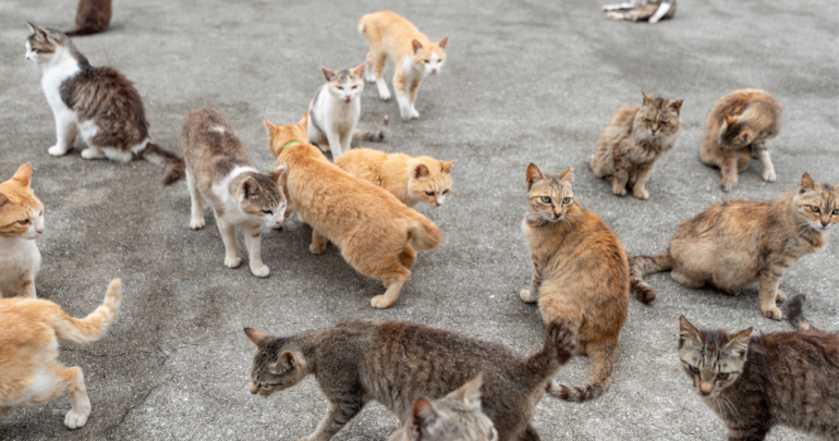 Cats crowd together on one of Japan's cat islands.
