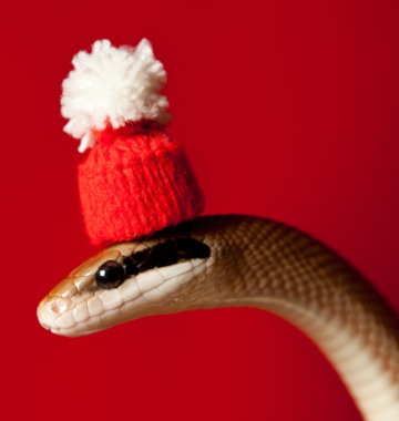 Snake with a hat on.