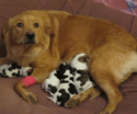 Proud Mama Dog Confused When She Gives Birth to Four Baby Cows